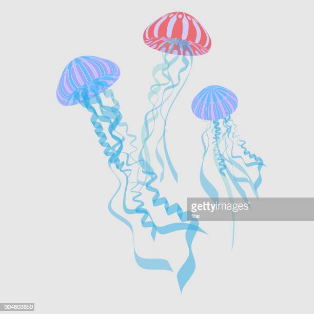 Illustration of Jellyfishes ,Vector Jellyfish,