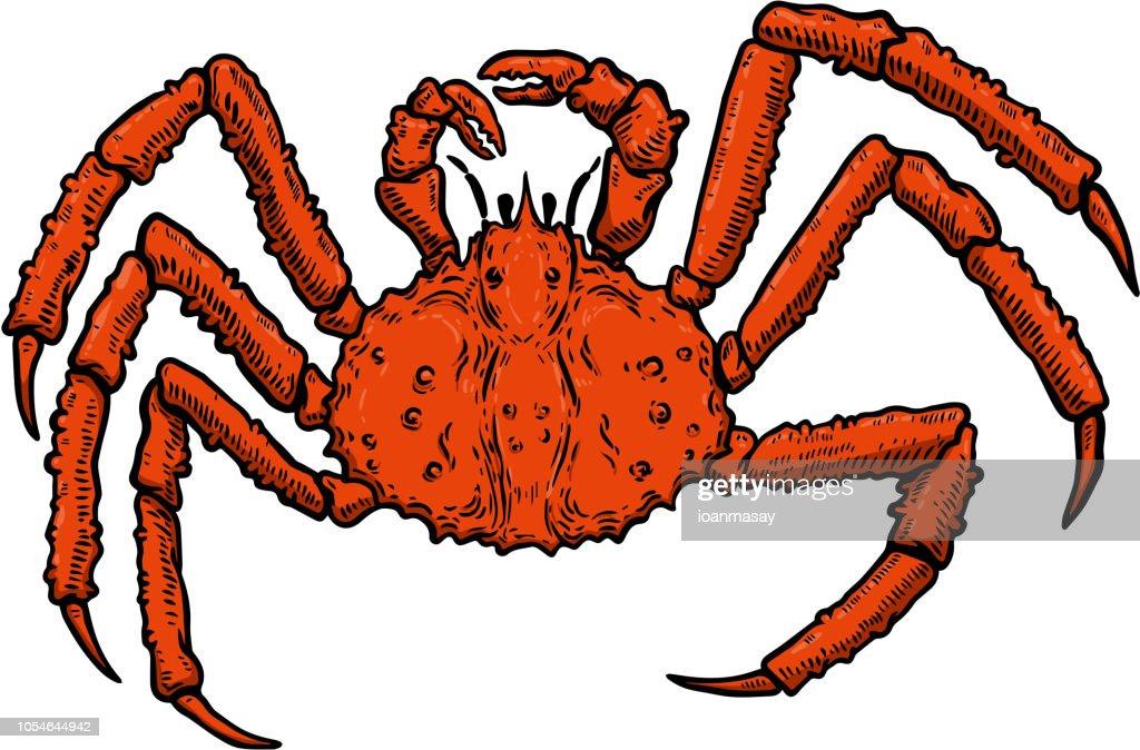 Illustration of King Crab isolated on white background. Design element for label, emblem, sign, poster, menu, t shirt.
