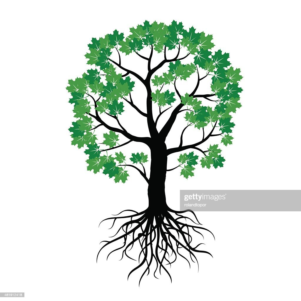 Illustration of Maple Tree and Roots