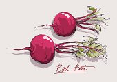 Illustration of red beets with tops on a white background