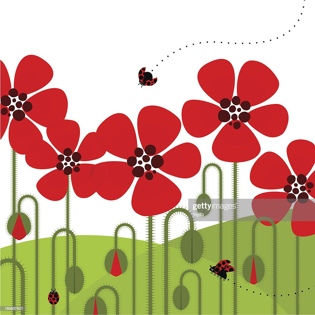 Illustration of red poppies with a ladybug flying by : stock illustration