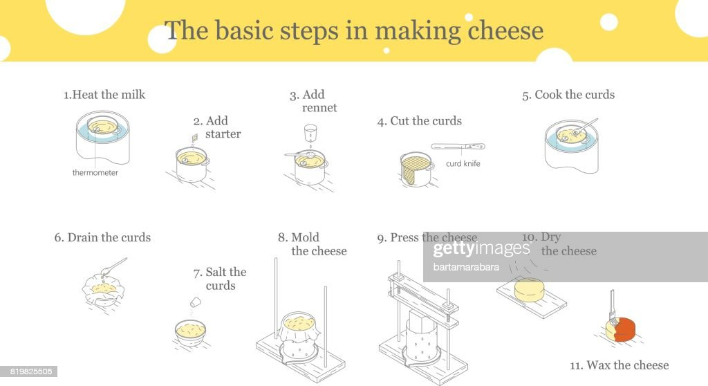 Illustration of the process of cheese production.