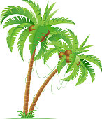 Illustration of two palm trees with coconuts