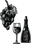 illustration of vine