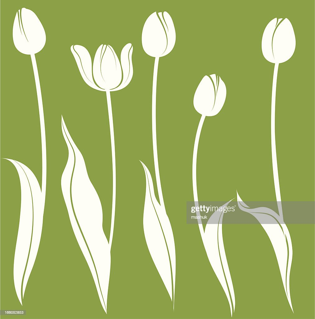 Illustration of white tulips on green background