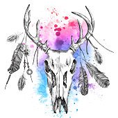 illustration with deer scull and feathers
