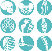 Illustrations of human anatomy. Orthopedic pictures of skeleton and different bones