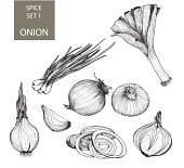 Illustrations of various types and forms of onions