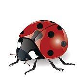 Illustrations.Ladybug