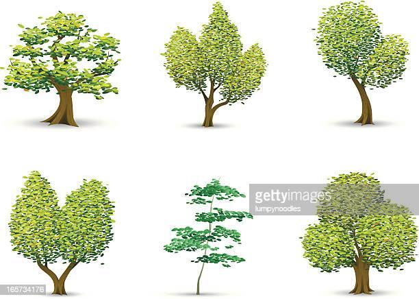 Illustrative Trees
