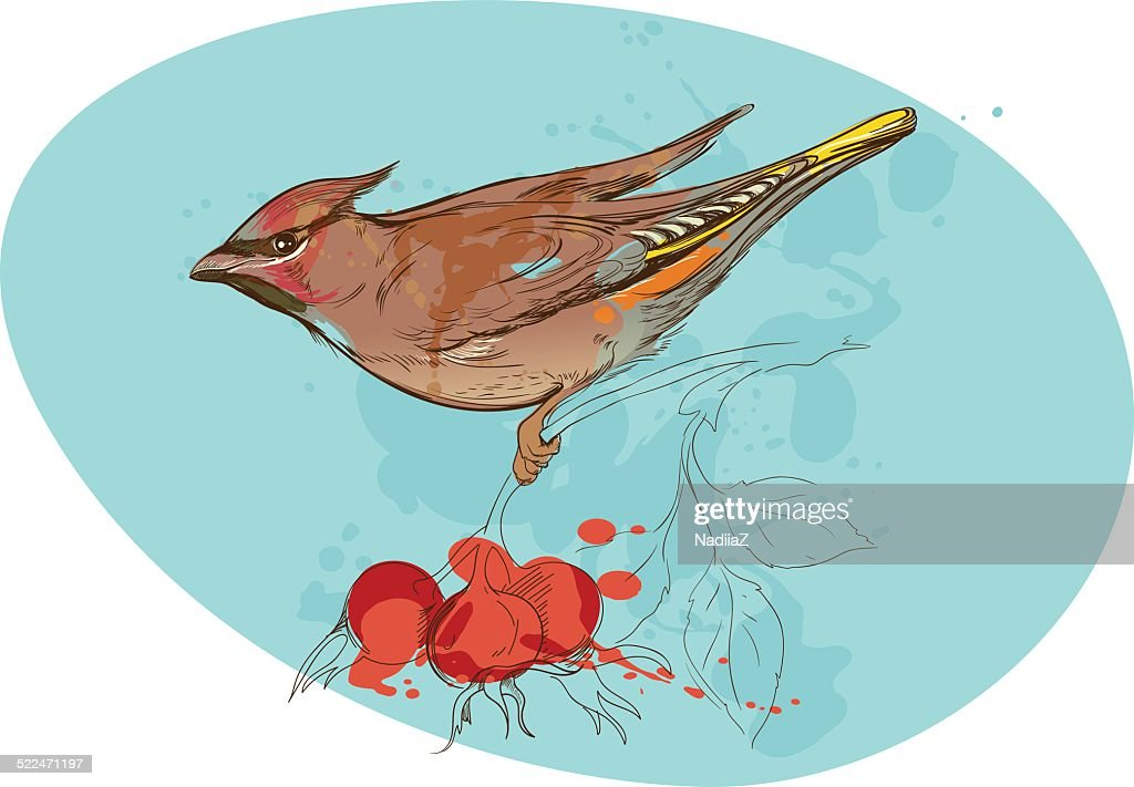 image of bird on a branch with sorbus berries and