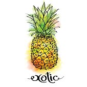 Image of pineapple fruit and lettering exotic on white background