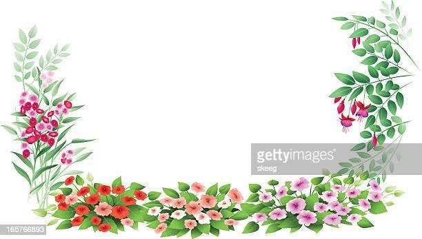 impatiens, fuschia, and sweet william - sweet william flower stock illustrations, clip art, cartoons, & icons