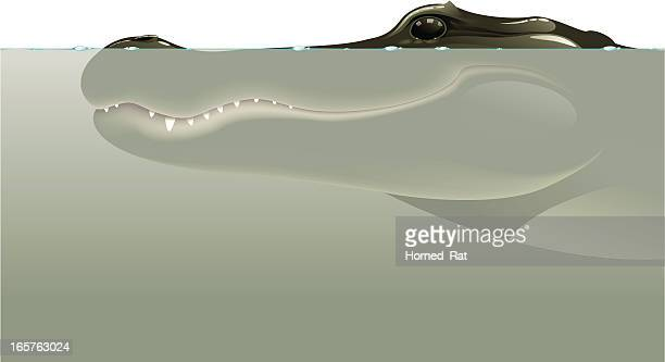 in murky waters - alligator - alligator stock illustrations, clip art, cartoons, & icons