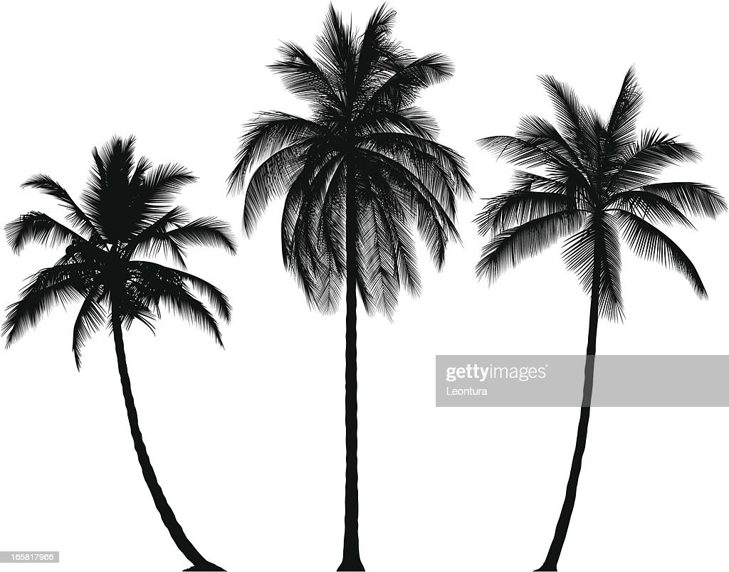 Vector Illustration Tree: Incredibly Detailed Palm Trees Vector Art