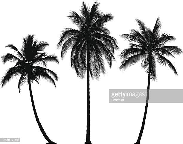 incredibly detailed palm trees - palm tree stock illustrations