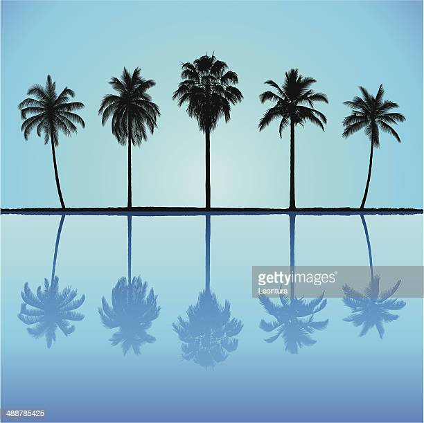 incredibly detailed palm trees - coconut palm tree stock illustrations, clip art, cartoons, & icons