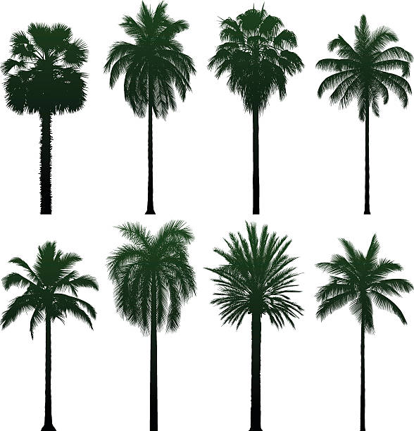 Incredibly Detailed Palm Trees Wall Art