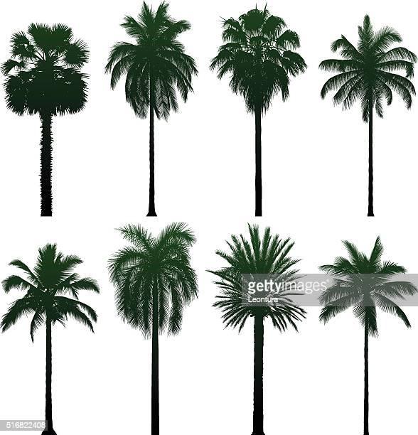 ilustraciones, imágenes clip art, dibujos animados e iconos de stock de muy detallada palmeras - palmera