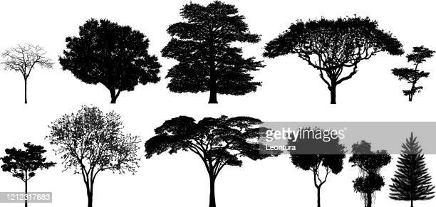 incredibly detailed tree silhouettes - tree stock illustrations