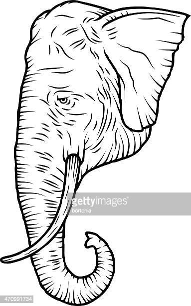 Indian Elephant Head, Black and White Line Art