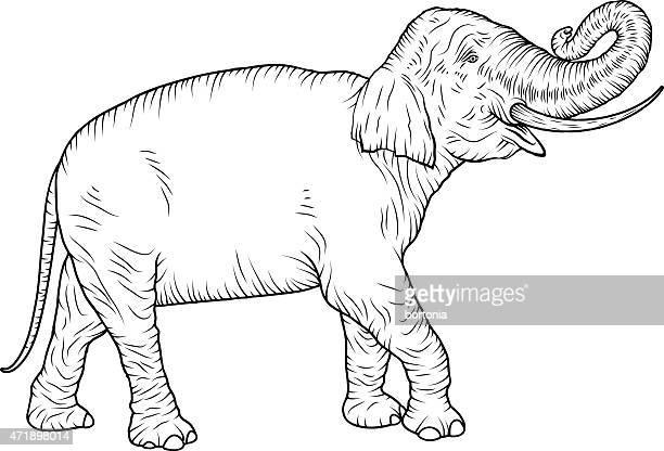 Indian Elephant Vintage Black and White Line Art