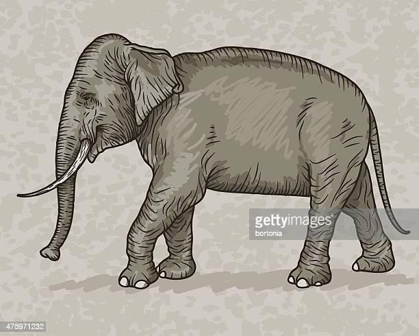 indian elephant vintage sketch style - asian elephant stock illustrations