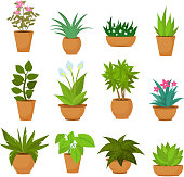 Indoor and outdoor landscape garden potted plants isolated on white. Vector set
