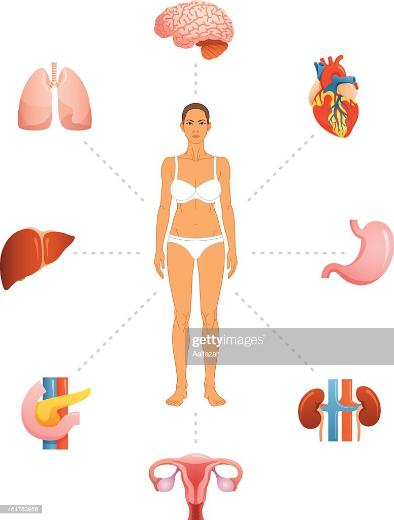 Infographic For Female Anatomy With Body And Organs Vector Art