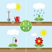 Infographic four stages of plant growth.