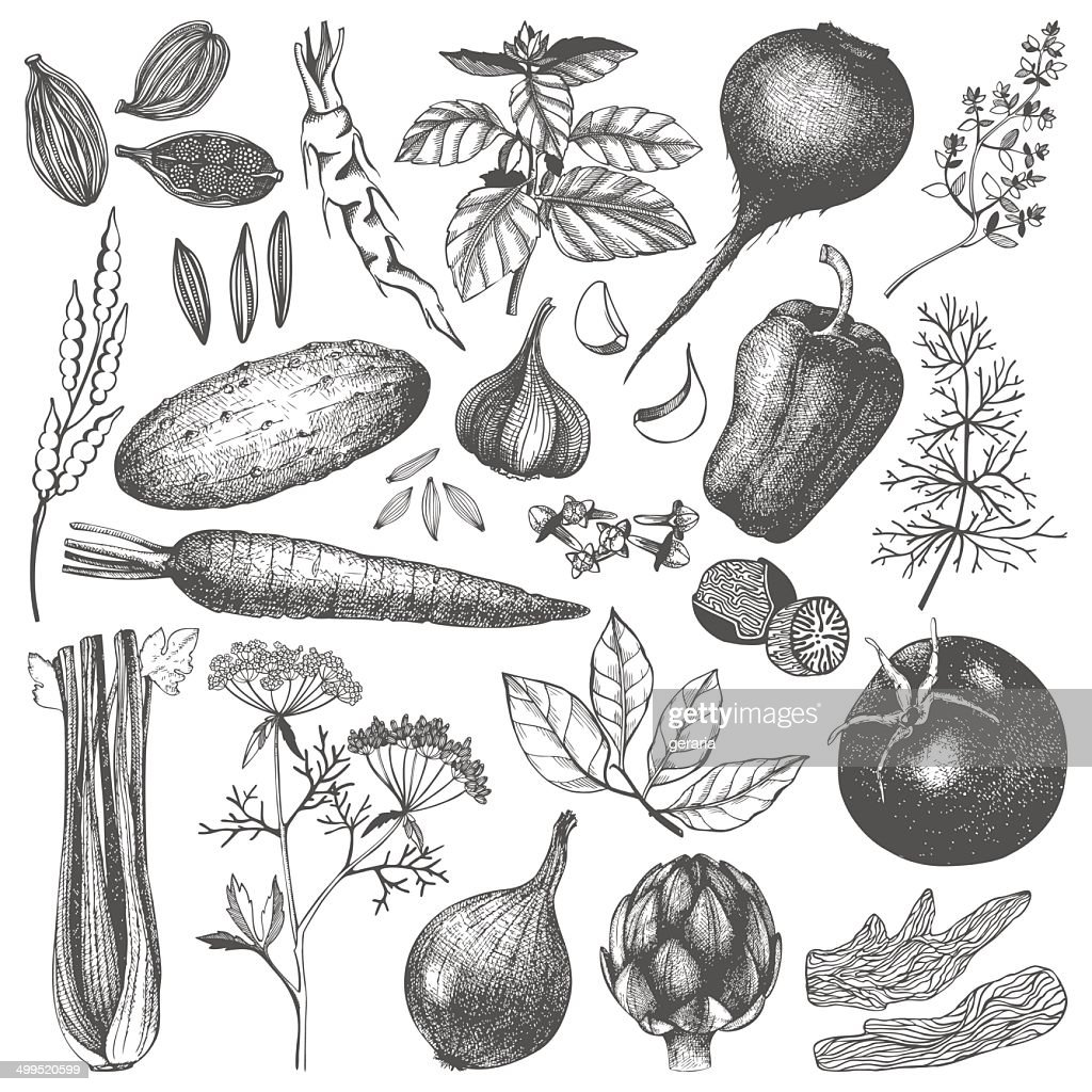ink hand drawn vegetables, herbs and spices