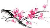 Ink illustration of sakura. Sumi-e style.