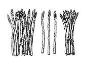 Ink sketch of asparagus.