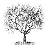 Ink sketch of dry tree.