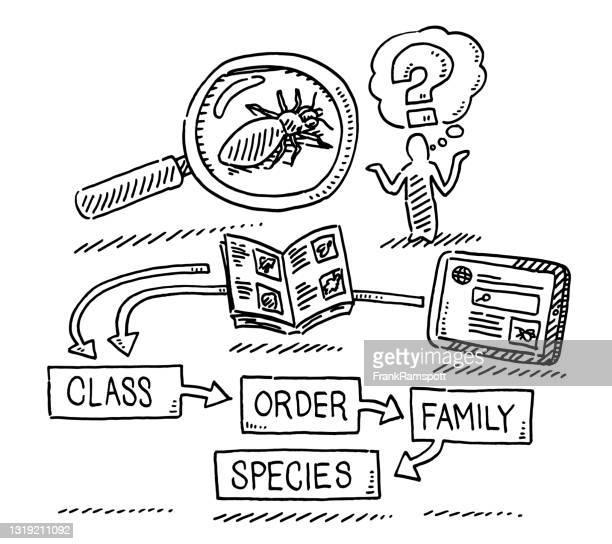 insect identification concept drawing - frankramspott stock illustrations