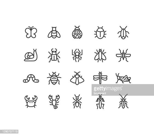 insect line icons editable stroke - butterfly insect stock illustrations