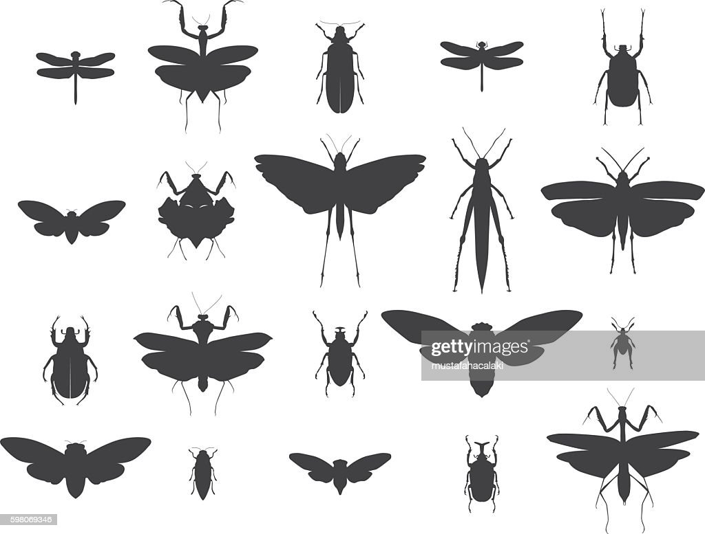 Insect silhouettes set : stock illustration