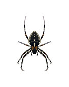 Insect spider vector illustration