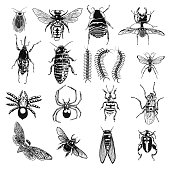 Insect stipple drawing set isolated. Insects and bugs collection in trendy embroidery stippling and hatching, shading style. Vector.