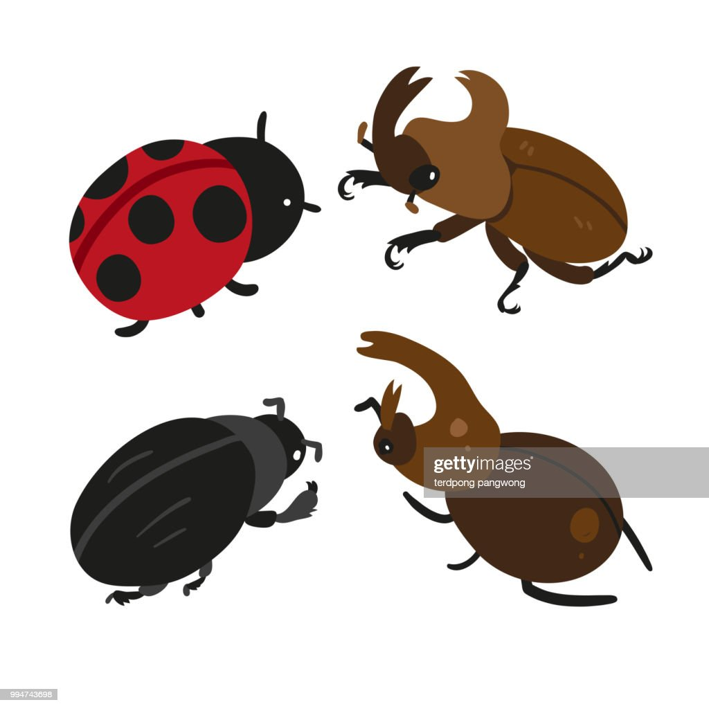 insect vector collection design