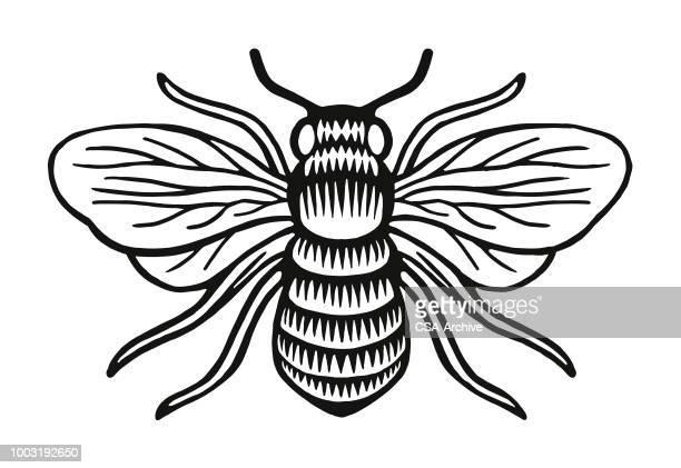 illustrations, cliparts, dessins animés et icônes de insecte - abeille