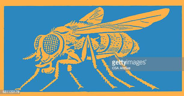 insect - fly insect stock illustrations, clip art, cartoons, & icons