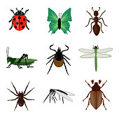 insects collection isolated