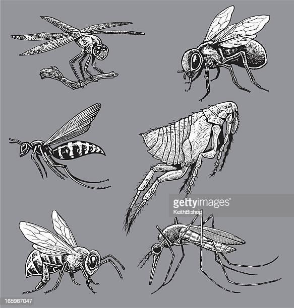 ilustraciones, imágenes clip art, dibujos animados e iconos de stock de insectos-mosquito, avispa, bee, fly, flea, libélula - mosquito
