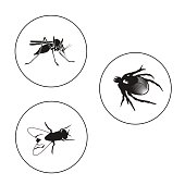 Insects Set Including Bug, Fly And Mosquito.