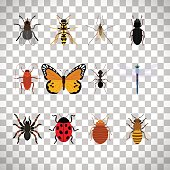 Insects set on transparent background