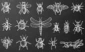 Insects Set with Beetles, Bees and Spiders on Black Chalkboard.
