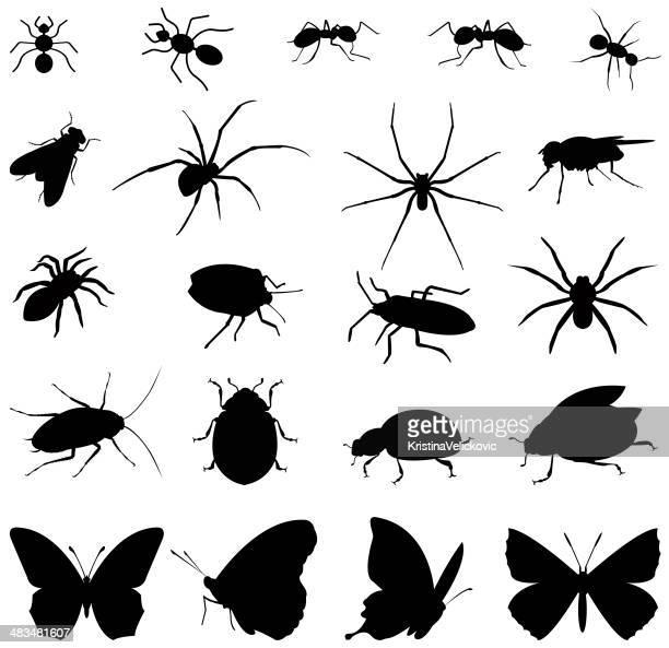 bildbanksillustrationer, clip art samt tecknat material och ikoner med insects silhouette - myra