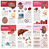 Internal Human Organ Health And Medical Chart Diagram Infographic