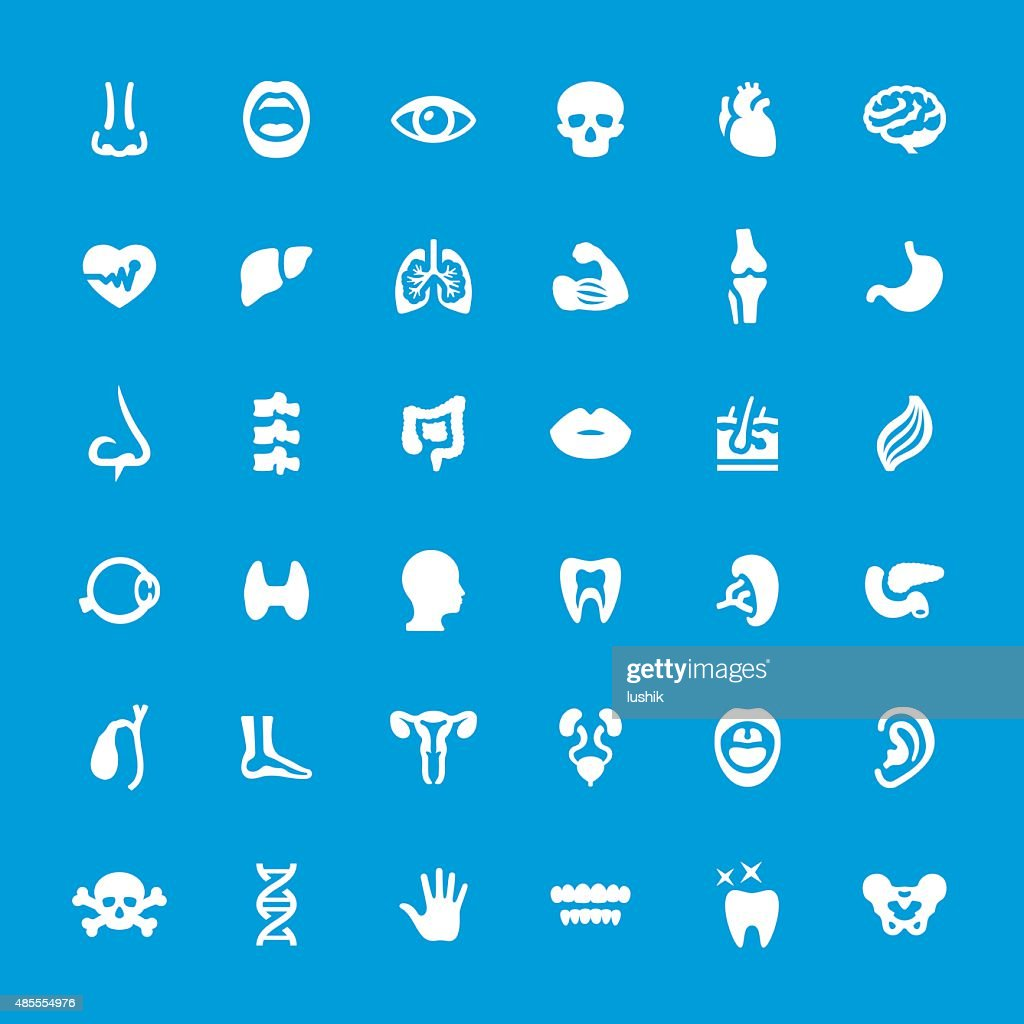 Internal Organ Anatomy Vector Icons Set Vector Art Getty Images